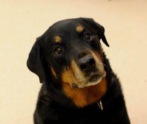 Dog Adoptions background