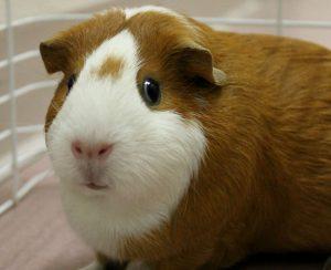 Small Animal Adoptions background