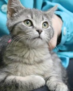 Steps to Become a Guelph Humane Society Volunteer background