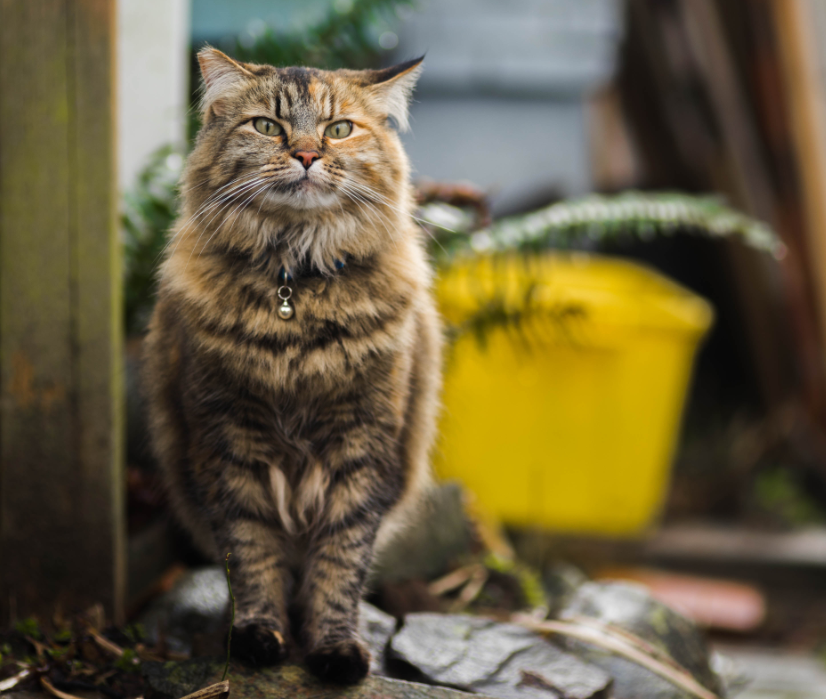 Working Cat Program background