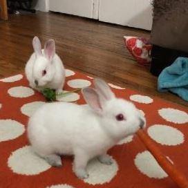 Adopt Poppy & Violet background