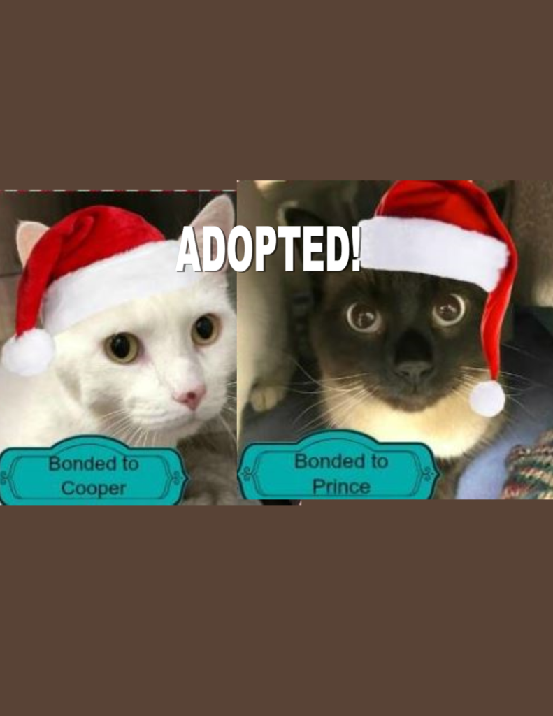 Adopt Prince & Cooper background