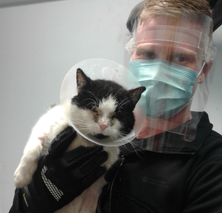 Man, with face shield and face mask, holding black and white cat.