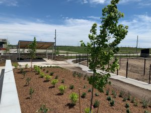 Planting Native Trees background